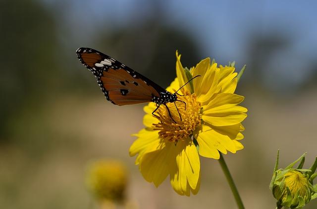 Bilde: Sommerfugl på en blomst.