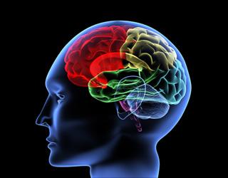 Bilde: Grafisk bilde av menneskehjerne med fargelagte hjernedeler.